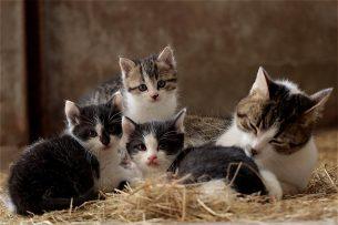 Katzen und andere Tiere