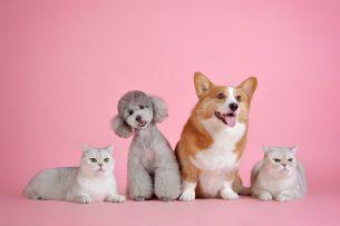 Muss man Katzen versichern?